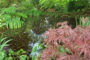 garden pond3
