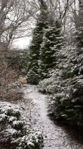 woodland garden (1)