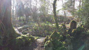 woodland garden (2)