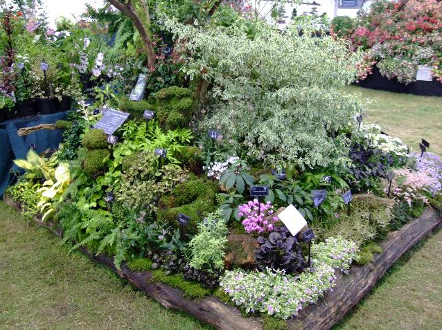 rhs tatton park flower show 2006