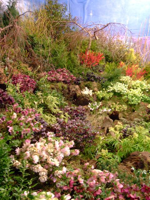winter gardening weekend 2007-3