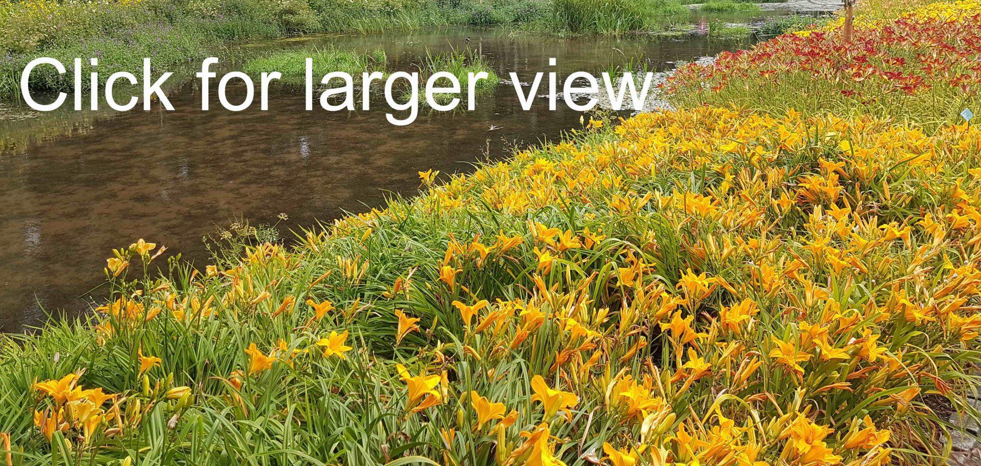 An amazing border of Hemerocallis at te National Botanic Garden of Wales