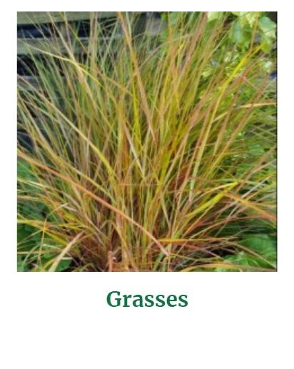 Shop for Grasses