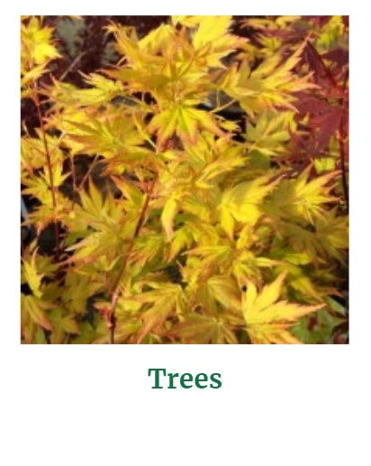 Shop for Trees
