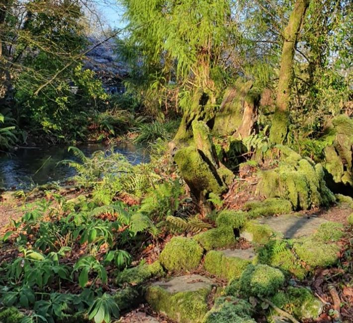 The Woodland Garden in January sunshine