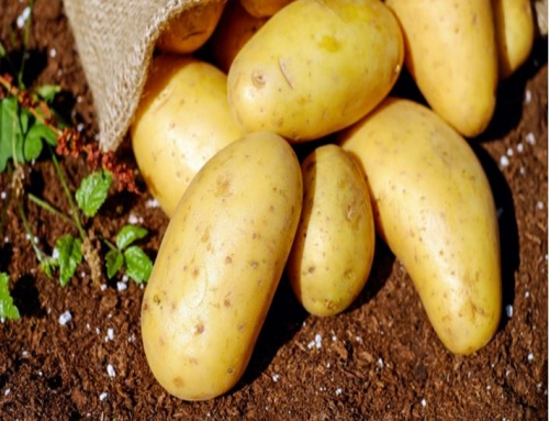 A Guide To Growing Potatoes In Your Garden