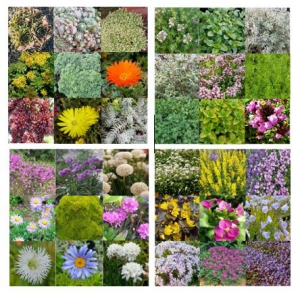 our living roof collections available from the nursery