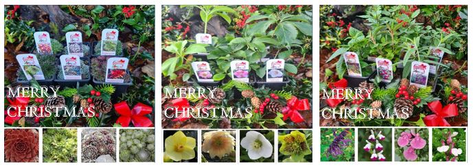 a selection of or christmas collections