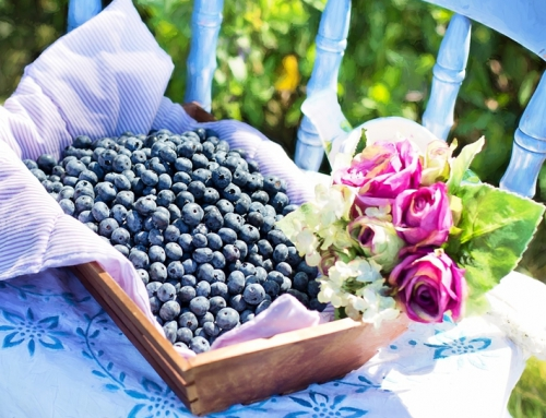 A Guide To Growing Blueberries In Your Garden