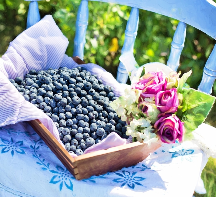freshly picked blueberries in a tray with roses