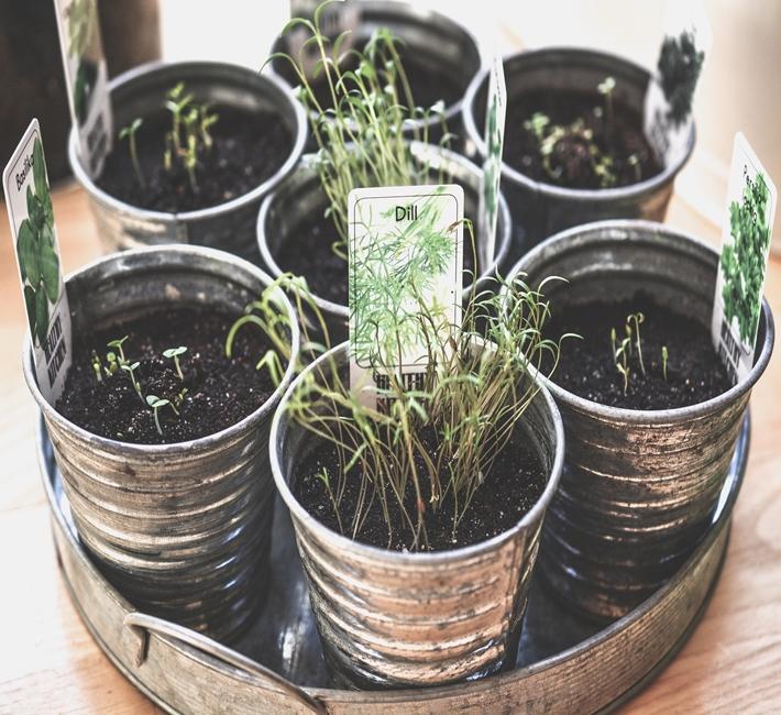 herbs growing in pots on a windowsill
