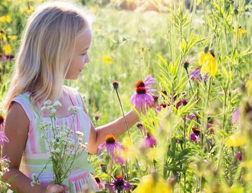 Prairie-style Planting
