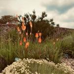prairie style planting, a habitat for wildlife